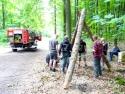 Holzbestimmung 1