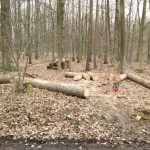 Wald-Erlebnis-Pfad